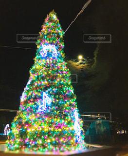 季節外れのクリスマスツリーの写真・画像素材[2933706]