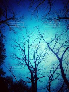 青の写真・画像素材[2974035]