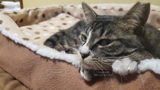 ひまそうな猫❗の写真・画像素材[2989362]
