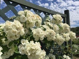 花の写真・画像素材[118844]
