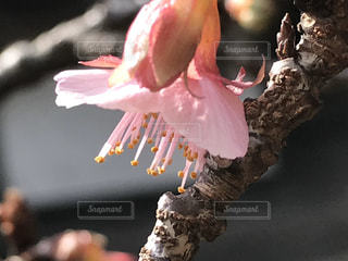 花をクローズアップするの写真・画像素材[2843500]