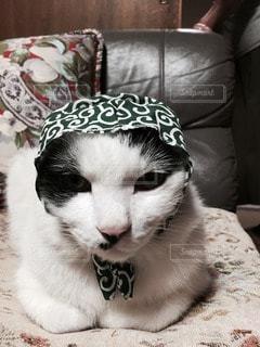 猫の写真・画像素材[116807]