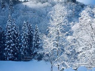 雪に覆われた斜面の写真・画像素材[2840327]