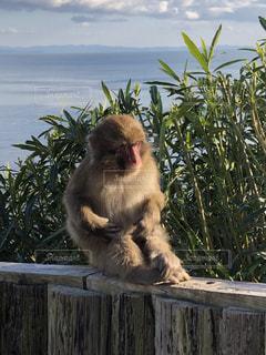 猿の写真・画像素材[2840762]