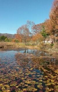 ひるがの湿原植物園の睡蓮の池の写真・画像素材[2844916]