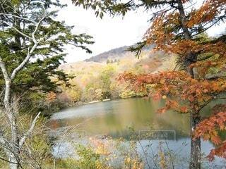 茶臼山高原の紅葉の写真・画像素材[2851309]