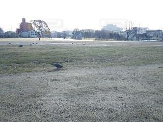 川名公園の鳩の写真・画像素材[2906489]