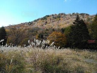 茶臼山高原の紅葉の写真・画像素材[2919648]