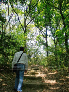 新緑の相生山緑地公園の写真・画像素材[2949370]
