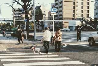 都会で犬の散歩の写真・画像素材[2993261]