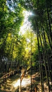 相生山緑地公園の竹林の写真・画像素材[3024215]
