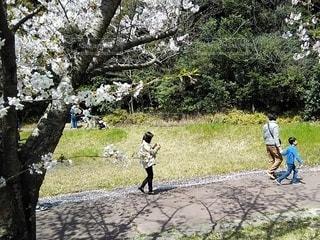 大高緑地公園でお花見の写真・画像素材[3076922]