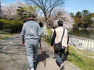 公園を散歩する夫婦の写真・画像素材[3093133]