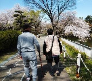 公園を散歩する年配のご夫婦の写真・画像素材[3094347]