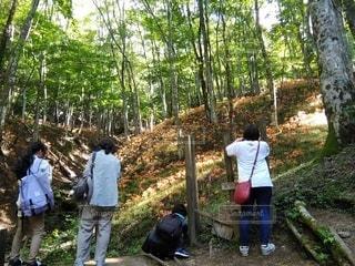 オオキツネノカミソリの群生を撮る人達の写真・画像素材[3578237]