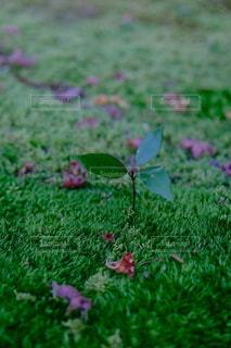 苔の写真・画像素材[2842836]