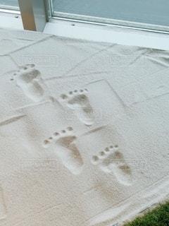 小さな足跡の写真・画像素材[2843414]