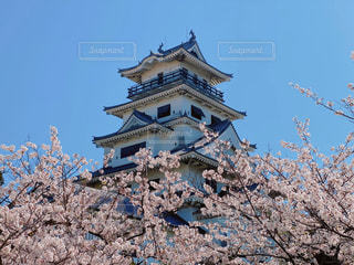 今治城と桜の写真・画像素材[3077341]
