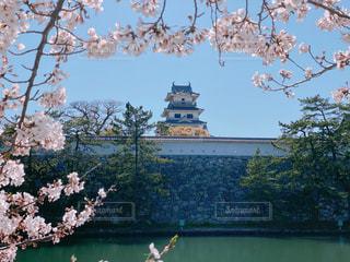 今治城と桜の写真・画像素材[3077348]