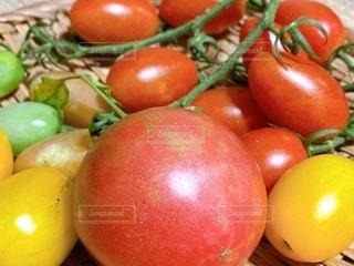 収穫したトマトの写真・画像素材[3414855]