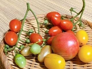 収穫したトマトの写真・画像素材[3414859]