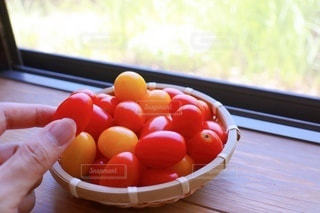 収穫したミニトマトの写真・画像素材[3562820]