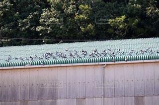 工場の屋根のカワラバト、ドバトの写真・画像素材[3698104]