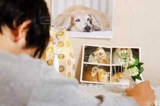 死亡した愛犬のミニチュアダックスフントの遺影 飼い主の撮影許可ありの写真・画像素材[4042679]