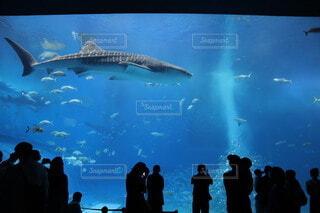 水族館の写真・画像素材[3796954]