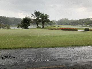 芝生に雨粒の写真・画像素材[2851036]