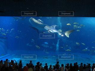 沖縄美ら海水族館の写真・画像素材[2852578]