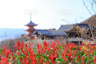 背景に清水寺の写真・画像素材[4413311]