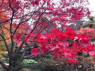木の中の赤い花の写真・画像素材[2852104]