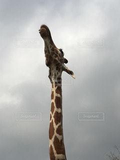 動物の写真・画像素材[109921]