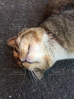 猫の写真・画像素材[126594]