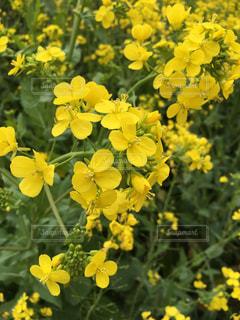 花の写真・画像素材[402656]