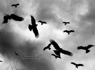 空を舞うとんびの群れの写真・画像素材[1130709]