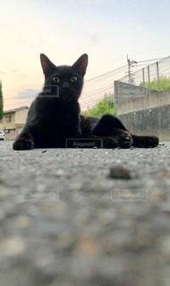 初めて出会った黒のノラ猫。一定の距離を保ちつつも近付いたり、遠ざかったり。カワイイ!の写真・画像素材[1412145]