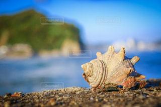 巻貝の写真・画像素材[2854982]