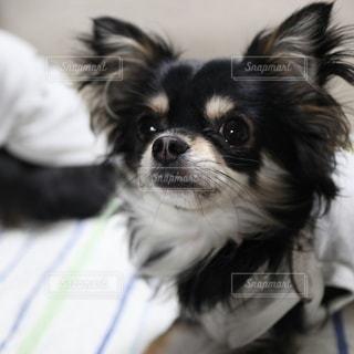 犬の写真・画像素材[2854377]