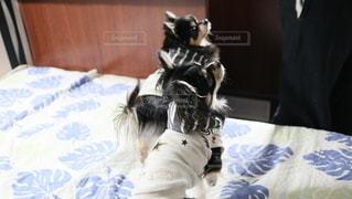 犬の写真・画像素材[2864746]