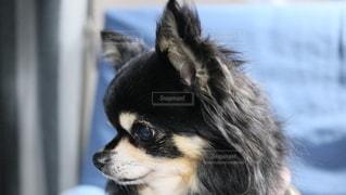 犬の写真・画像素材[2866536]