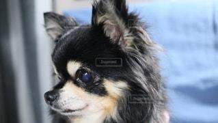 犬の写真・画像素材[2866538]