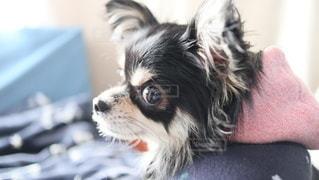 犬の写真・画像素材[2881656]