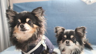 犬の写真・画像素材[2881655]