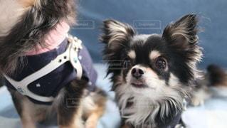 犬の写真・画像素材[2881659]