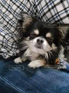 犬の写真・画像素材[2885688]
