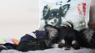 犬の写真・画像素材[2892197]