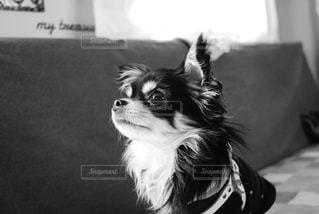 犬の写真・画像素材[2899010]