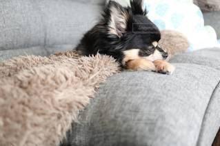 犬の写真・画像素材[2915752]